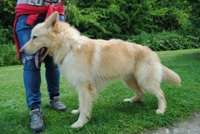 Castlefield Kennel dogs 051-w800-h1000