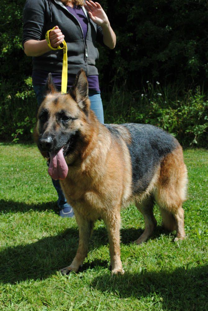 Castlefield Kennel dogs 057-w800-h1000
