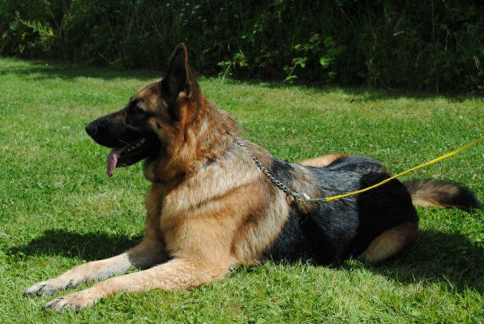 Castlefield Kennel dogs 060-w800-h1000