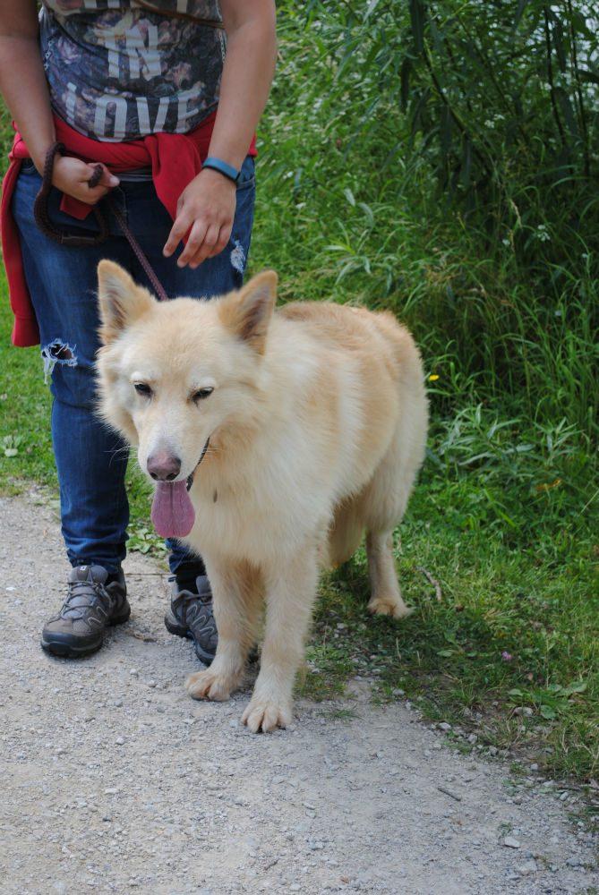 Castlefield Kennel dogs 068-w800-h1000