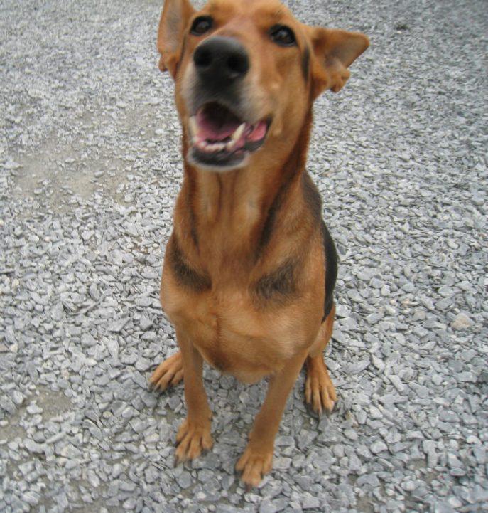 Heidi (8)