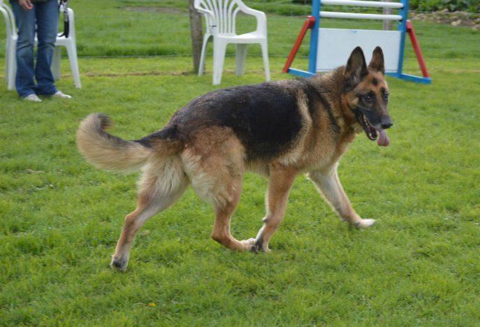 Sheba (3)