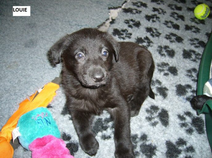 Pup 2 Louie-w1000-h800