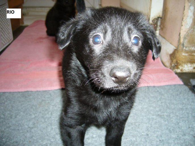 Pup 5 Rio-w1000-h800