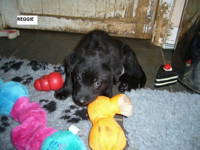 Pup 7 Reggie-w1000-h800