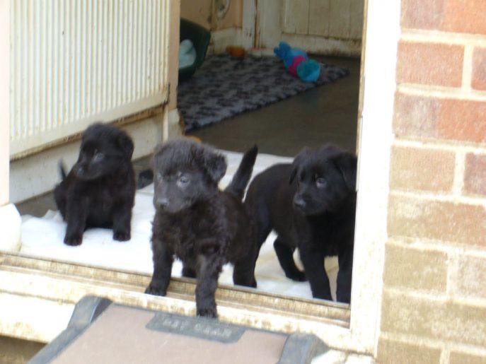 Pups April 2015 (1)