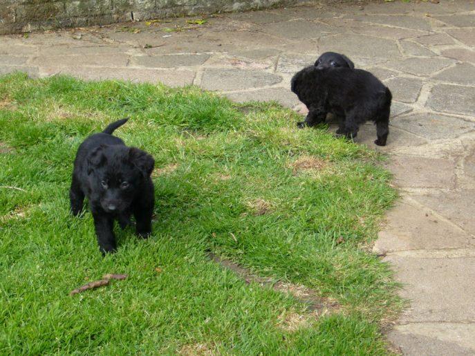 Pups April 2015 (10)