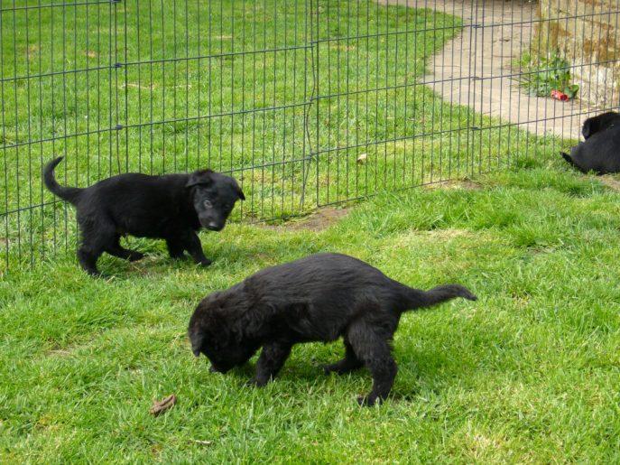 Pups April 2015 (11)
