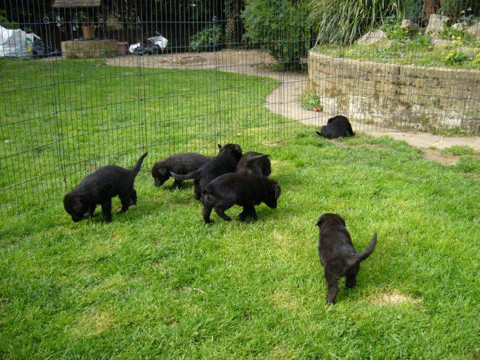Pups April 2015 (12)