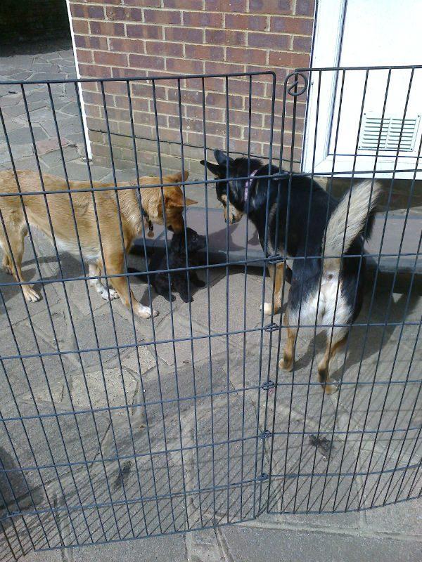 Pups April 2015 (13)