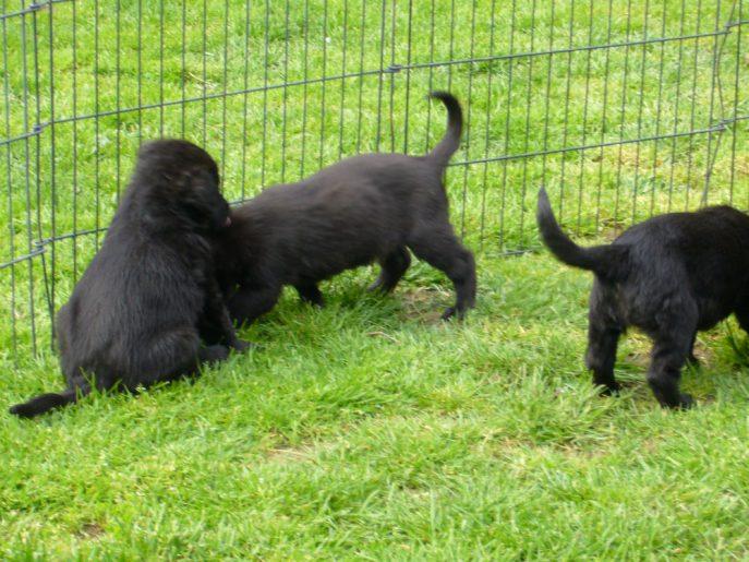 Pups April 2015 (2)