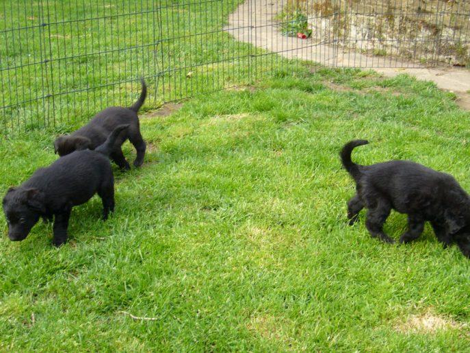 Pups April 2015 (3)