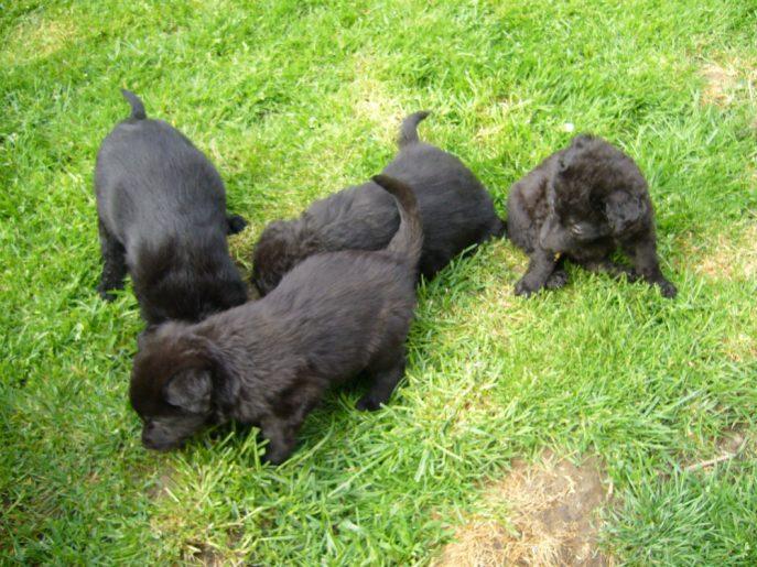 Pups April 2015 (6)