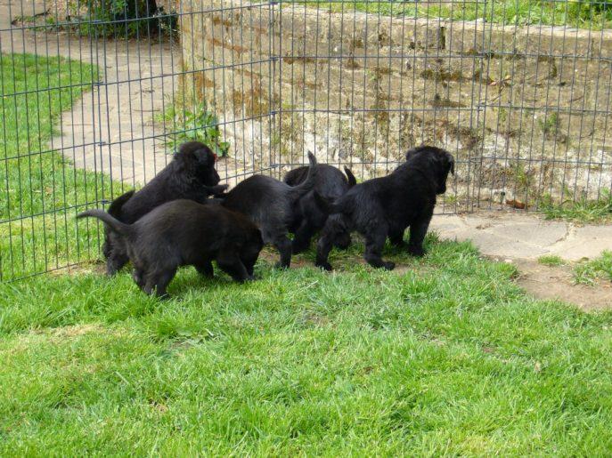 Pups April 2015 (8)