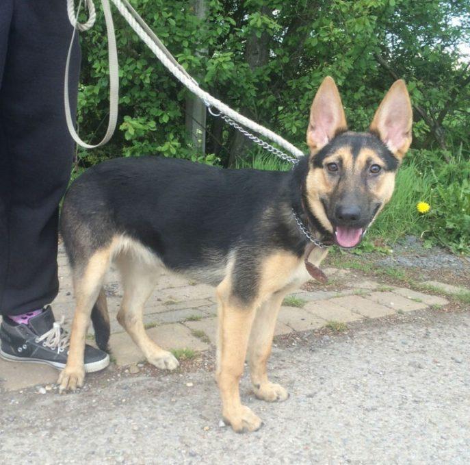 Roxy Pup (11)