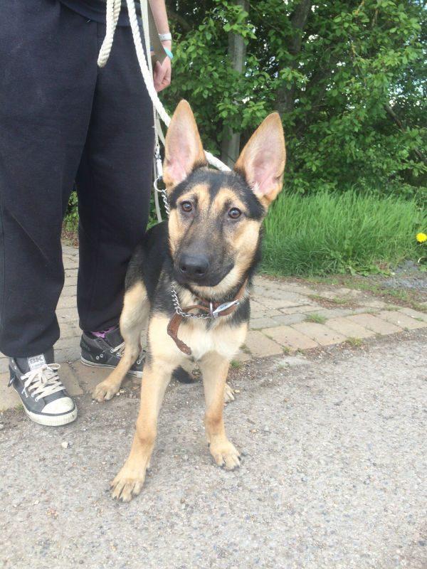 Roxy Pup (12)