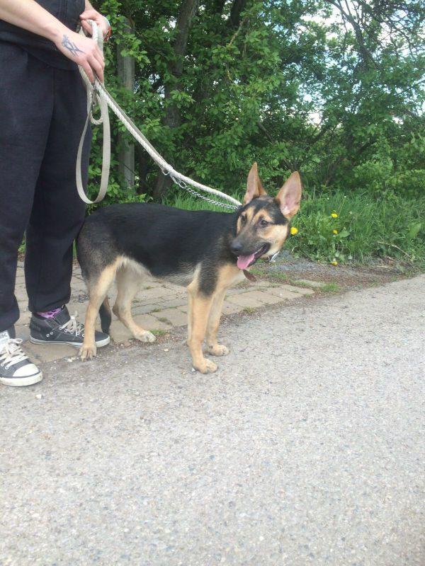 Roxy Pup (13)
