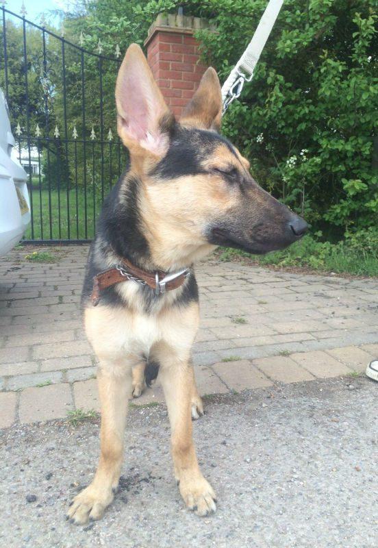 Roxy Pup (2)