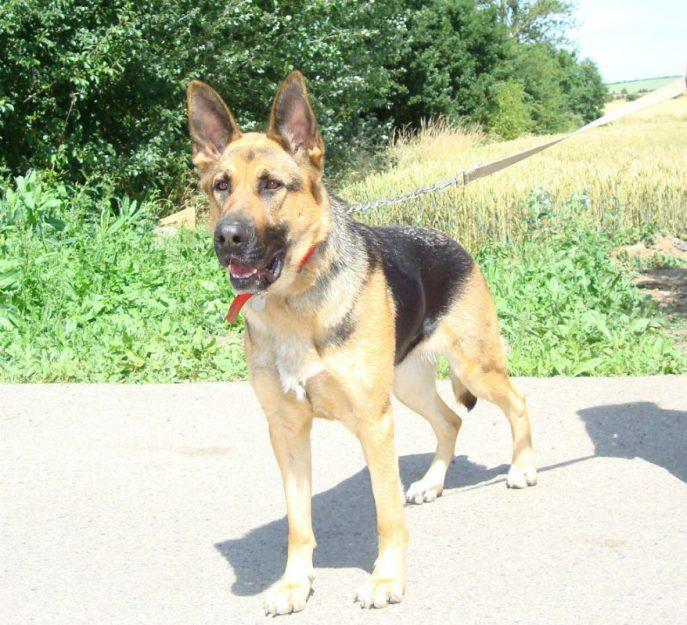 Goldie (8)
