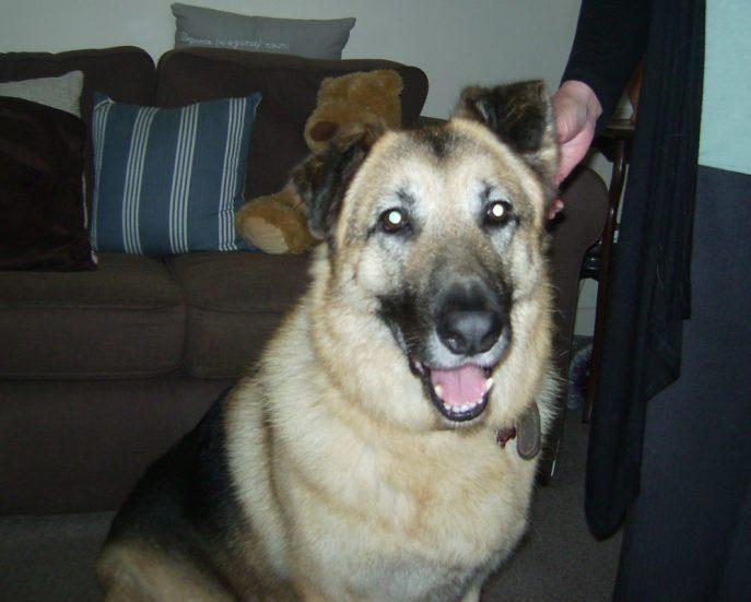 Alfie (3)