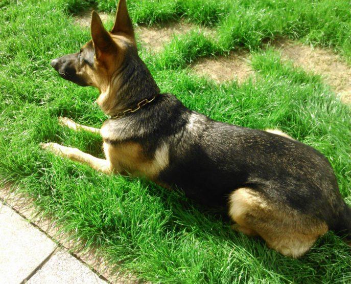Baxter (3)
