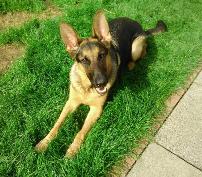 Baxter (4)