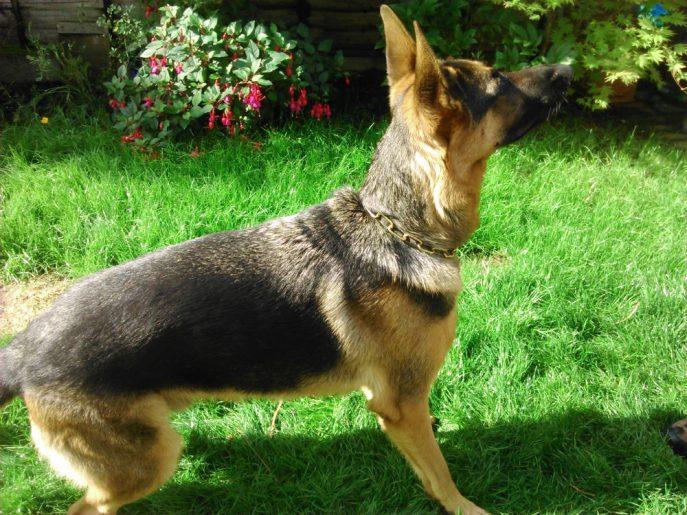 Baxter (7)