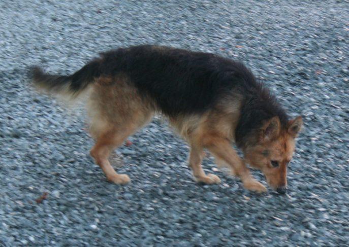 Roxy (11)