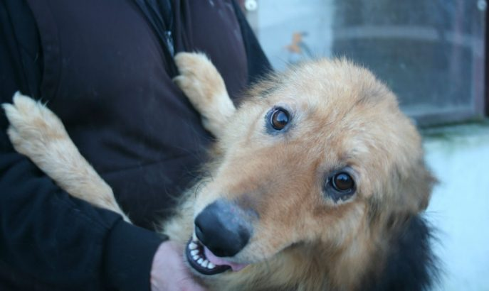 Roxy (13)