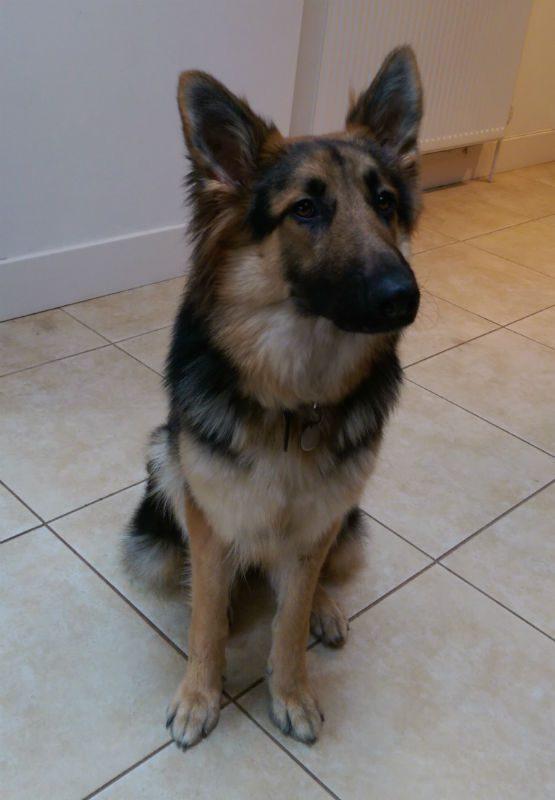Bella (10)
