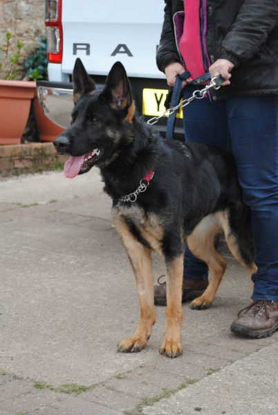 Hickingwood Kennel dogs April 2016 068-w800-h600