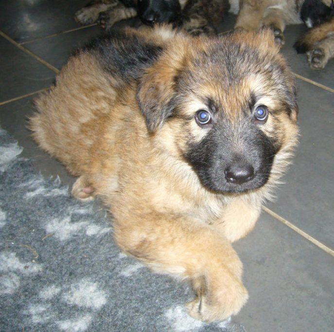 Barney Pup (6)