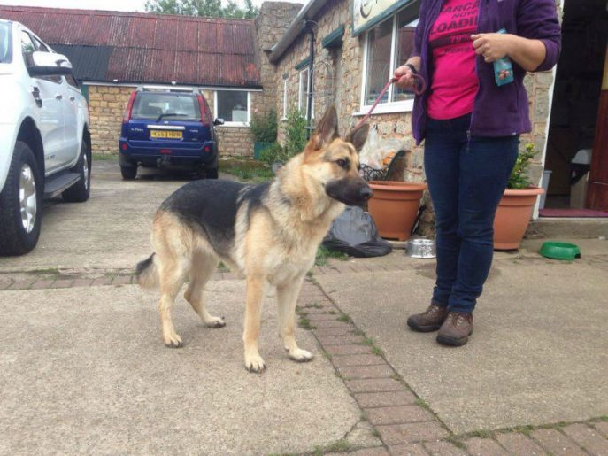Lassie 1-w800-h600
