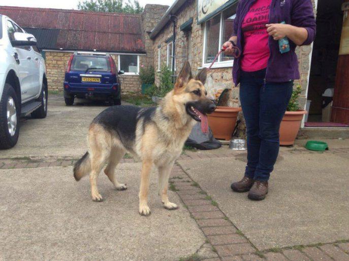 Lassie-w800-h600