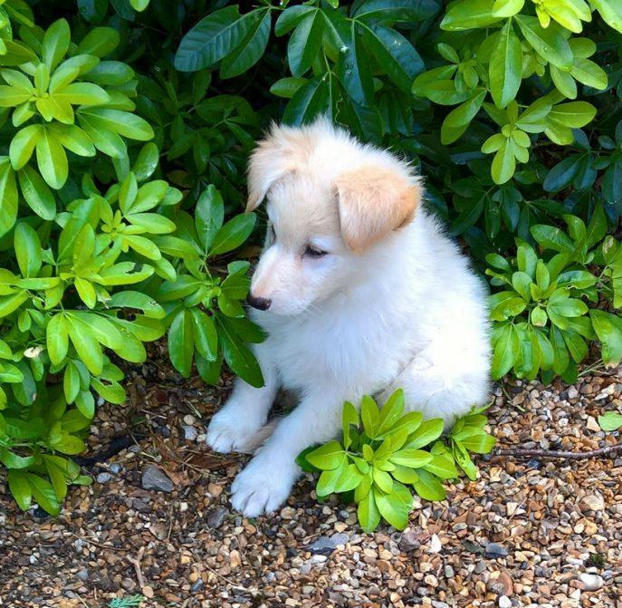 Mabel Pup (10)