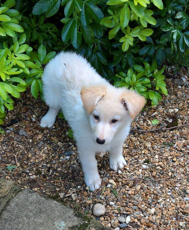 Mabel Pup (11)