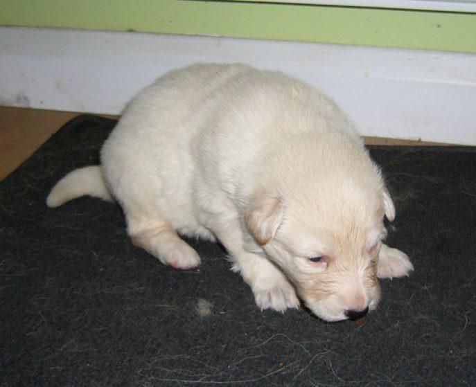 Mabel Pup (3)