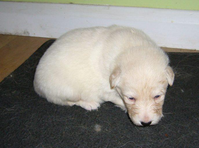 Mabel Pup (4)