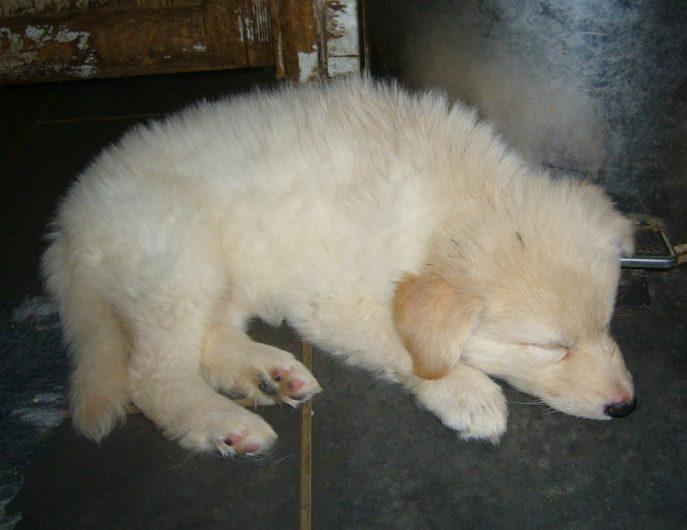 Mabel Pup (5)