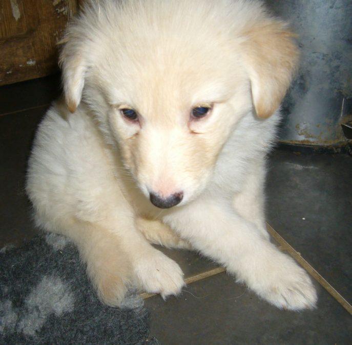 Mabel Pup (6)