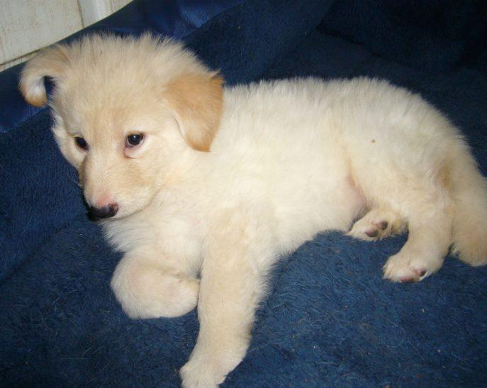 Mabel Pup (8)