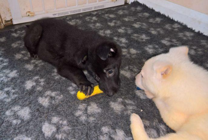 Puppies (10)