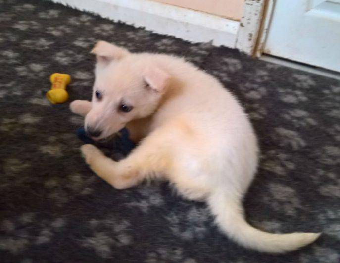 Puppies (12)