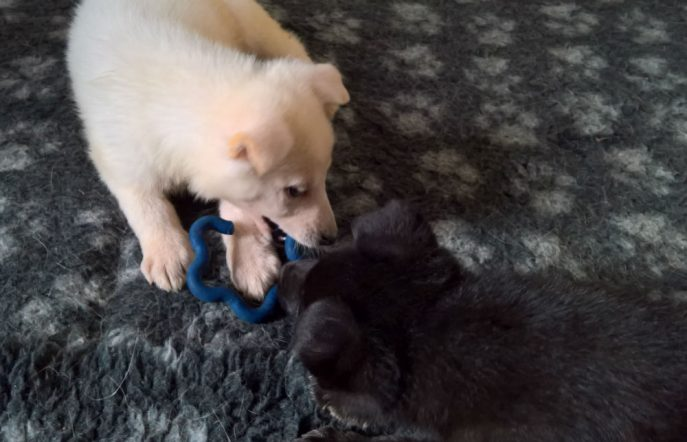 Puppies (14)