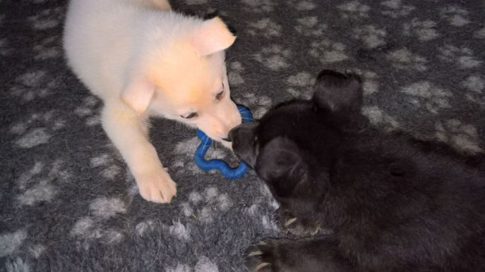 Puppies (15)