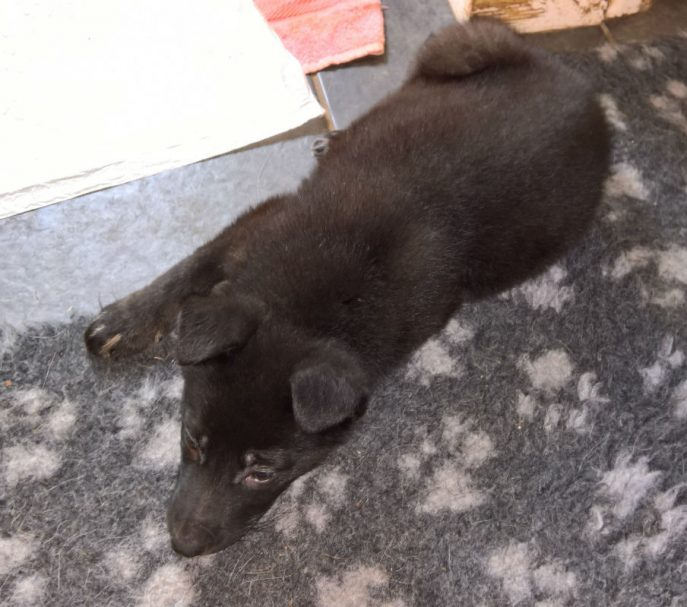 Puppies (17)