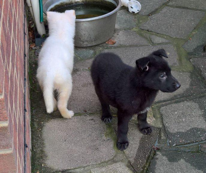 Puppies (18)