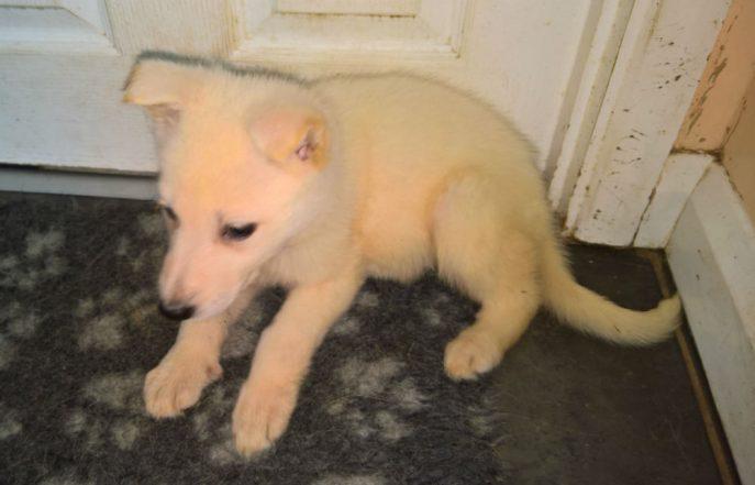 Puppies (6)