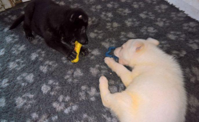 Puppies (8)
