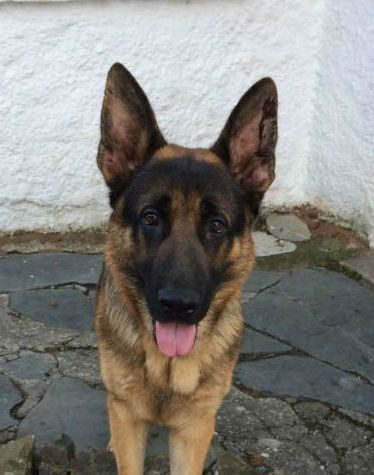 Hector (1)